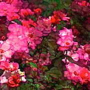 Rose 202 Art Print by Pamela Cooper