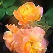 Rose 221 Art Print