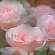 Rose 243 Art Print