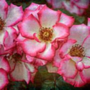 Rose 298 Art Print