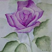 Rose 3 Art Print by Nancy Edwards
