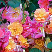 Rose 304 Art Print