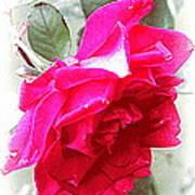 Rose - 4505-004 Art Print