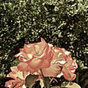 Rose 55 Art Print