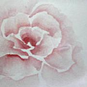 Rose Absolute Art Print