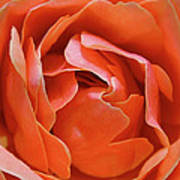 Rose Abstract Art Print