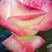 Rose Among The Thorns Art Print