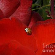 Rose And Ladybug Art Print