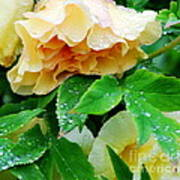 Rose And Leaves On A Rainy Day Art Print