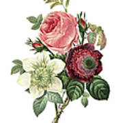 Rose, Anemone And Clematis   Redoute Art Print
