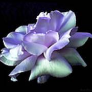 Rose Awakening Floral Art Print by Jennie Marie Schell