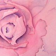 Rose Cabbage Art Print