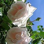 Rose Duo Art Print