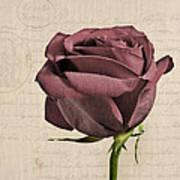 Rose En Variation - S02c3t3a Art Print
