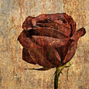 Rose En Variation - S22ct05 Art Print