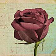 Rose En Variation - S23ct06 Art Print