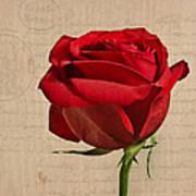 Rose En Variation - S2at03a Art Print