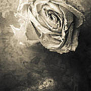 Rose From Another Day Art Print