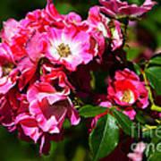 Rose Garden 4 Art Print