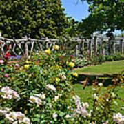 Rose Garden And Trellis Art Print