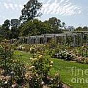 Rose Garden At The Huntington Library Art Print
