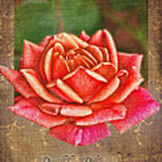 Rose Greeting Card Birthday Art Print