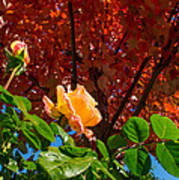 Rose In Autumn Art Print
