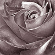 Rose In Black And White Art Print