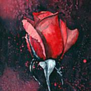 Rose In Flames Art Print