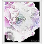 Rose In Pastels Art Print