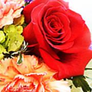 Rose Is A Rose Art Print