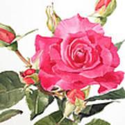 Watercolor Red Rose Margaret Art Print