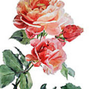Watercolor Of Red Roses On A Stem I Call Rose Maurice Corens Art Print