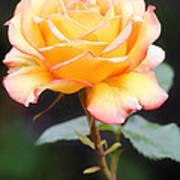 Rose Art Print by Melisa Meyers
