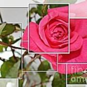 Rose Montage Art Print