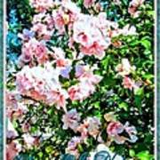 Rose Of Sharon -hibiscus Syriacus Art Print by Margaret Newcomb