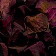 Rose Petals #4 Art Print