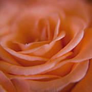 Rose Petals Art Print by Kim Lagerhem