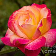 Rose Rainbow Sorbet Art Print