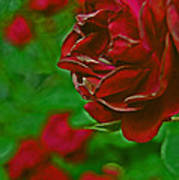 Rose Red By Jrr Art Print