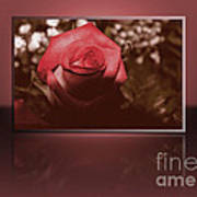 Rose Reflection 1 Art Print