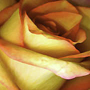 Rose Scan Softened Art Print