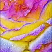 Rose With Dew Drops In Candy Colors Art Print