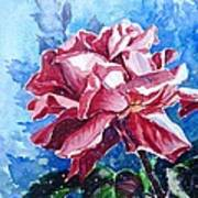 Rose Art Print by Zaira Dzhaubaeva