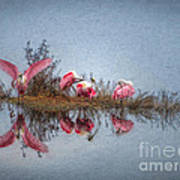 Roseate Spoonbills At Rest Art Print