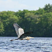 Roseland Lake Great Blue Heron Fly By  Art Print