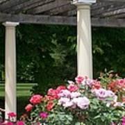 Roses And Pergola Art Print