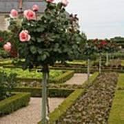 Roses And Salad - Chateau Villandry Art Print
