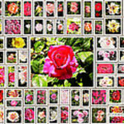 Roses Collage 2 - Painted Art Print