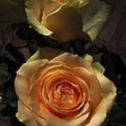 Roses Forever_2 Art Print